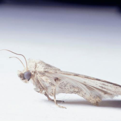 carpet Moth control Cambridgeshire