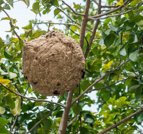 Wasp nest treatments Cambridgshire
