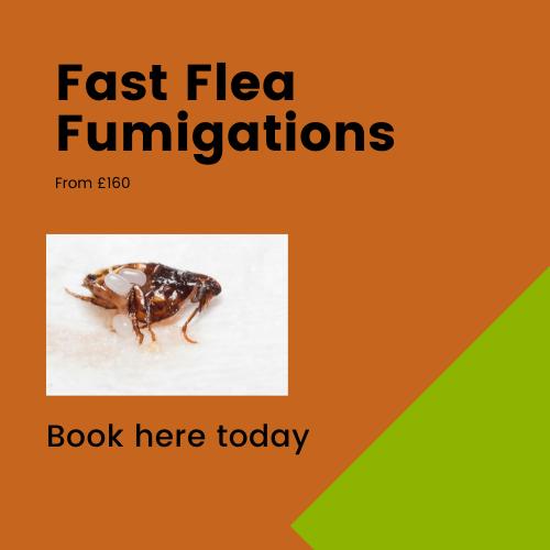 flea fumigations cambridge